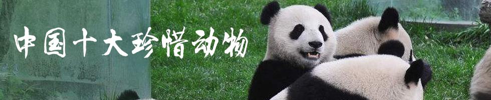 中国十大珍稀动物