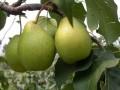 90后女孩谈天吃这种水果,月瘦30斤!