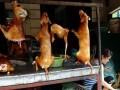 狗肉节之争:夏至为什么要吃狗肉?