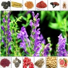 黄芩提取物黄芩苷优质原料黄芩粉