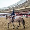 2018第十二届中国国际马业马术展览会