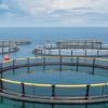 2019黄渤海国际水产养殖博览会