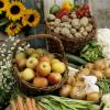 2019贵阳果蔬种植技术展