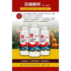 亞磷酸鉀生產廠家 柑橘潰瘍病克星治病增產增強抗病力藥肥