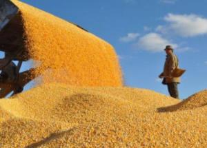 我國正處于糧食安全形勢歷史最好時期