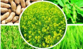 2020第十一届中国国际新型肥料展览会