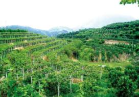 2020中國(海南)國際熱帶農業博覽會