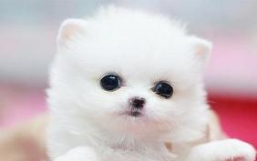 2020中國(大連)寵物文化節